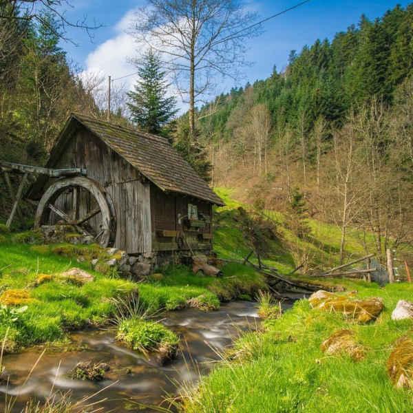 Der grüne Schwarzwald
